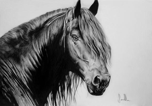 Desenho de cavalo a grafite, papel canson A4 200gr, 2016