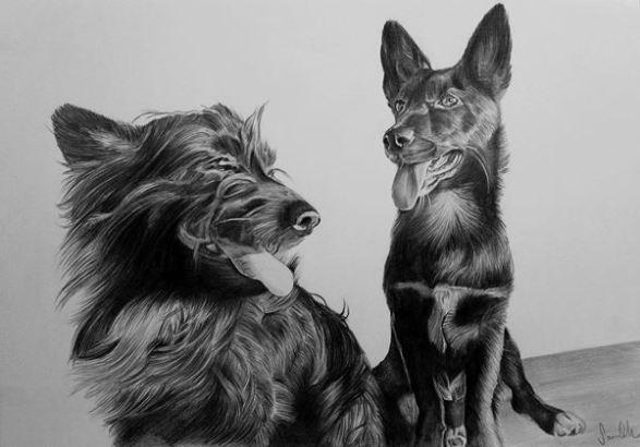 Retrato de cães a grafite sobre papel canson A4, 2017