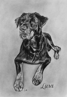 Retrato de cão a grafite sobre papel canson A3 200gr, 2016