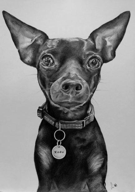 Retrato de cão a grafite sobre papel canson A4 200gr, 2016