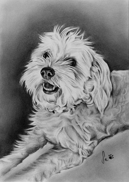 Retrato de cão a grafite sobre papel canson A4, 2017