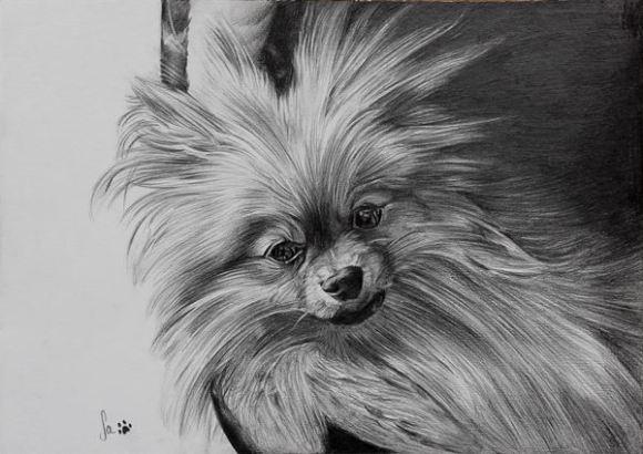Retrato de cão, grafite sobre papel canson A4 200gr, 2016