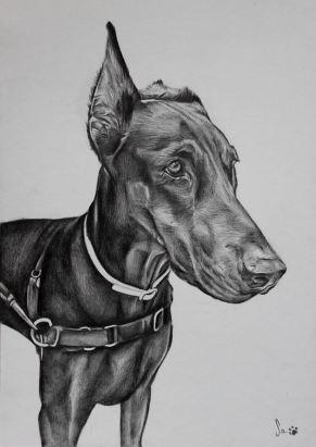 Retrato de cão, grafite sobre papel canson A4, 2016