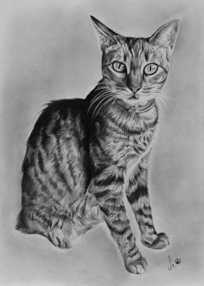Retrato de gato a grafite sobre papel canson A4, 2016