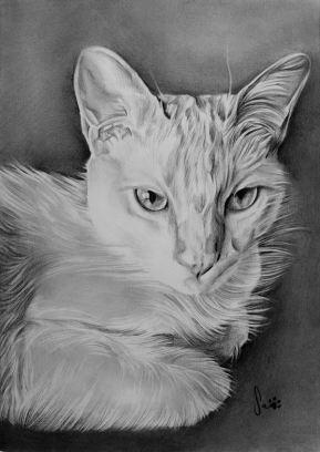 Retrato de gato, grafite sobre papel canson A4, 2016